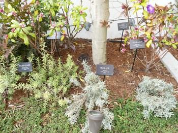 7庭園植栽.jpg