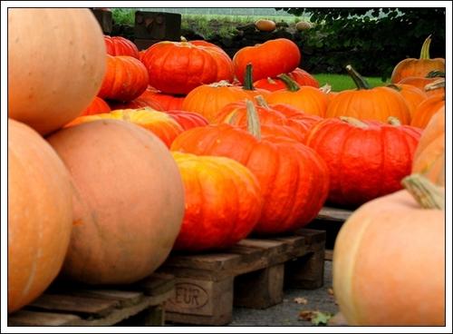 pumpkin-2725299_1920.jpg